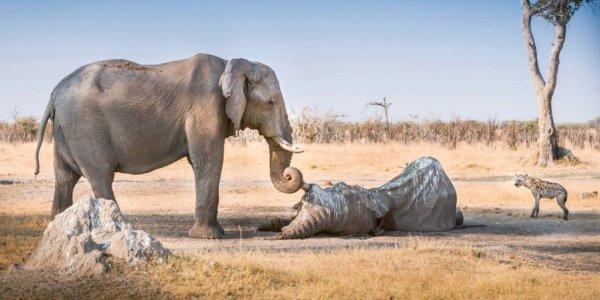20131224_o-ELEPHANT-facebook