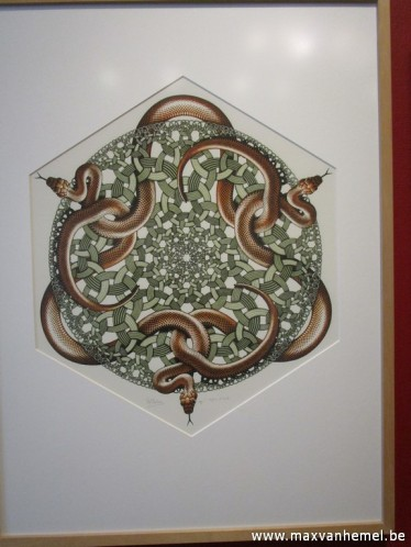 Den Haag - Eschermuseum (ringslangen)